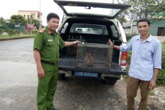Tiếp nhận cá thể động vật hoang dã quý hiếm để cứu hộ